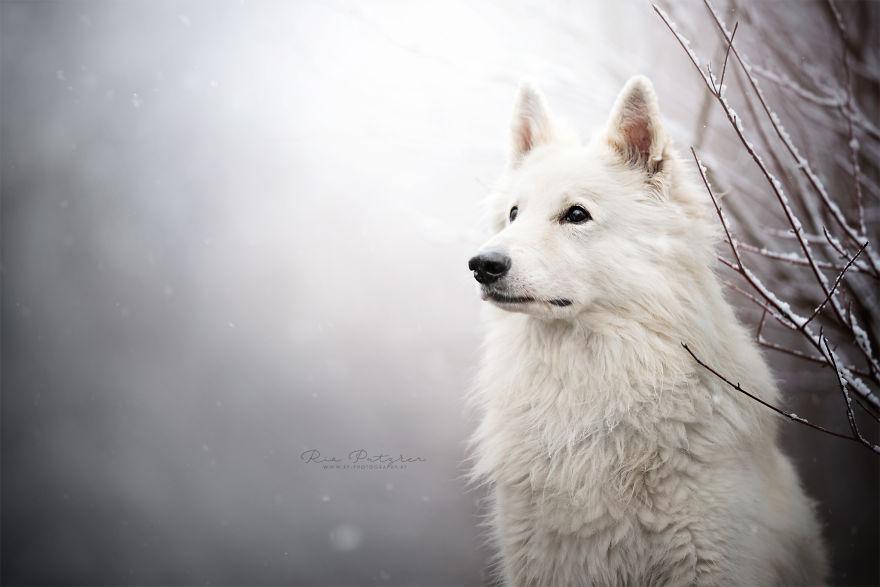 Bucuria sufletului frumos de caine, in poze superbe - Poza 9