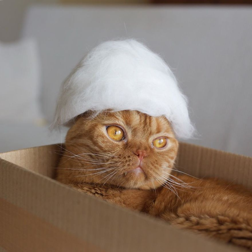Cochete si haioase: Pisici cu palarii blanoase - Poza 13