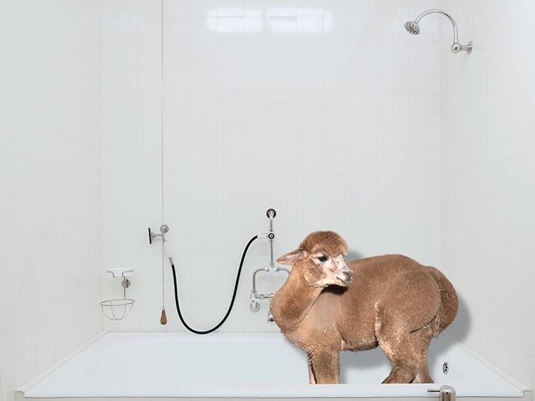 Cele mai zambarete animale din lume, in circumstante elegante - Poza 8