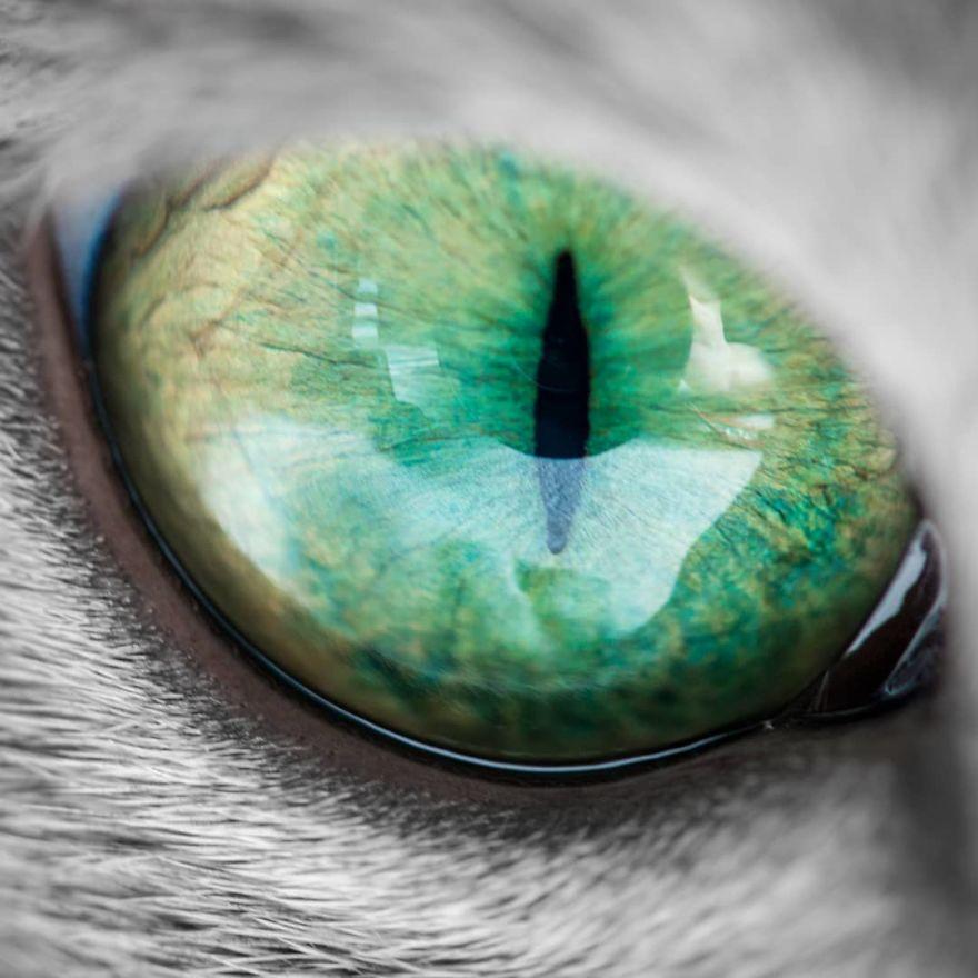 Pisicutele cu cei mai frumosi ochi din lume, in poze superbe - Poza 8