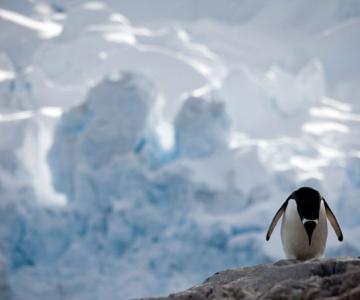 Unhappy Feet: Viata grea de pinguin, de Camille Seaman