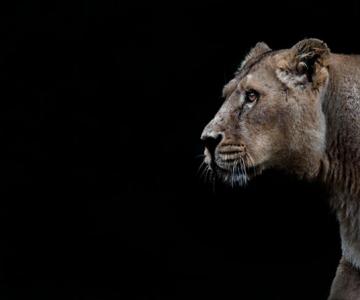 Animalele imblanzite de fotografa Sue Demetriou