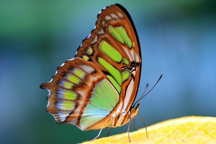 Cei mai frumosi fluturi din lume, in poze spectaculoase - Poza 14