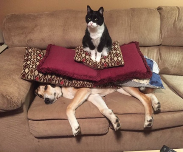 Pisici puse pe rele, in poze haioase