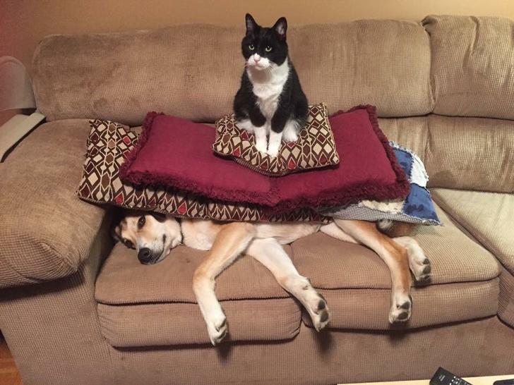 Pisici puse pe rele, in poze haioase - Poza 1