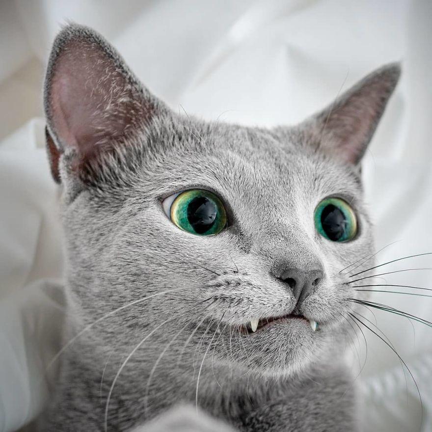 Pisicutele cu cei mai frumosi ochi din lume, in poze superbe - Poza 4