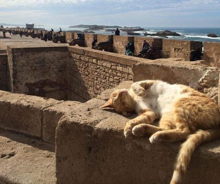 20+ Pisici adorabile si somnul lor nefiresc - Poza 24