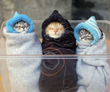 13 Pisicute care iti vor insenina ziua