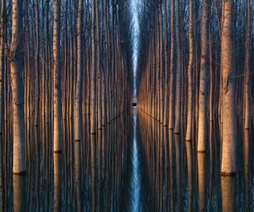 Peisaje cu paduri infinite, de Oliver Delgado