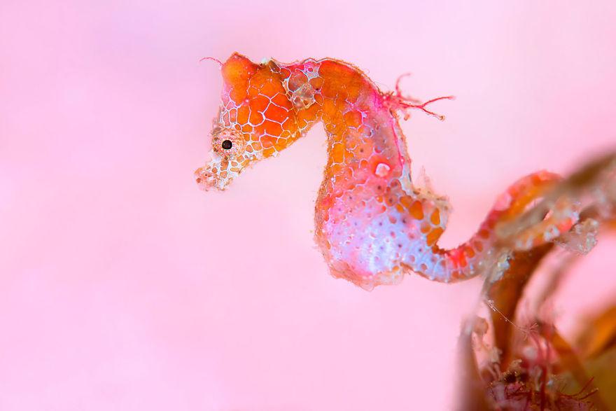 Fotografii superbe din uimitoarea lume subacvatica - Poza 7