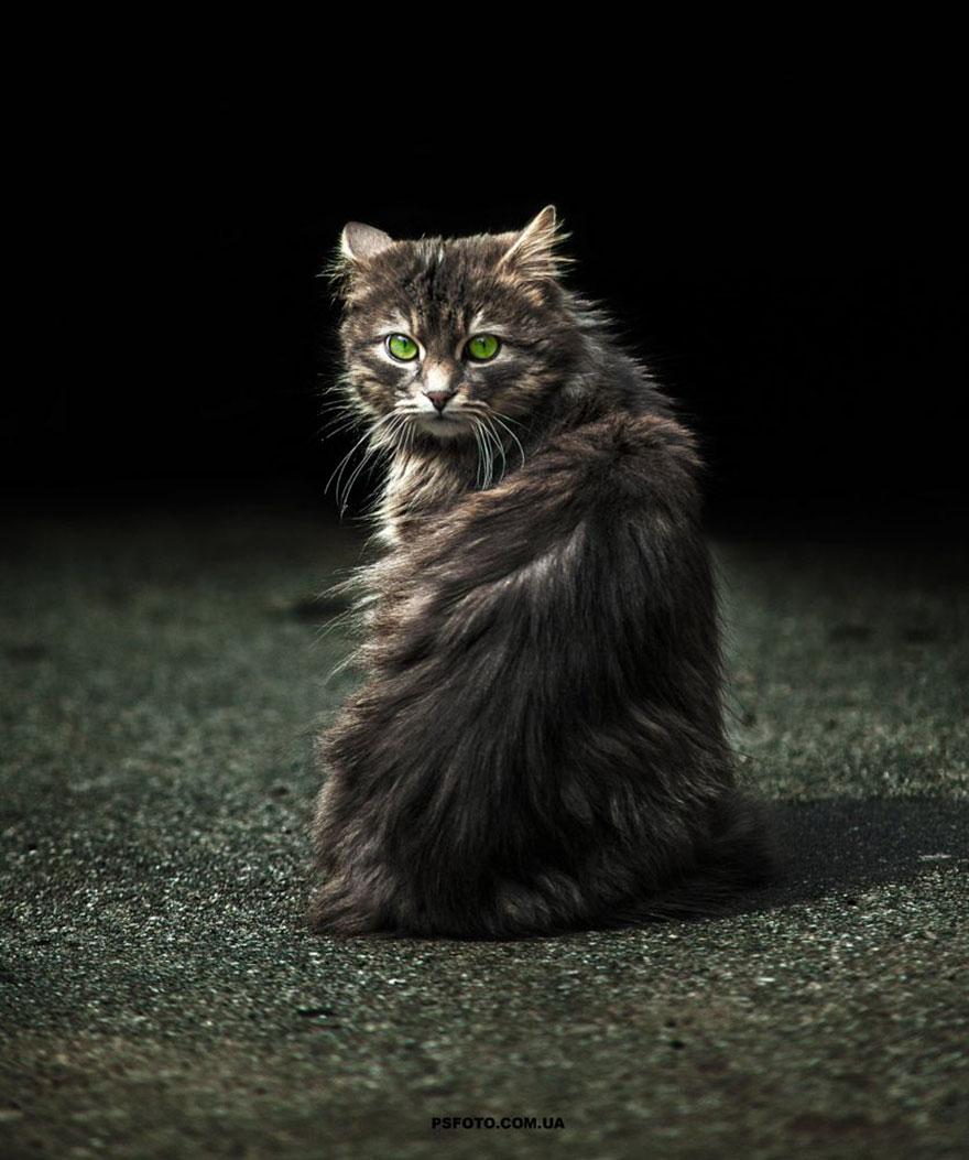 Portrete superbe de animale, de Sergey Polyushko - Poza 9