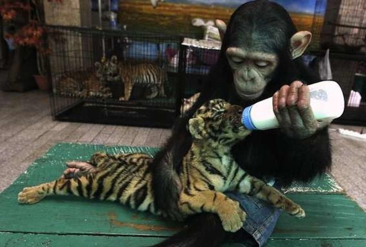 Cele mai prietenoase animale, in imagini induiosatoare - Poza 5