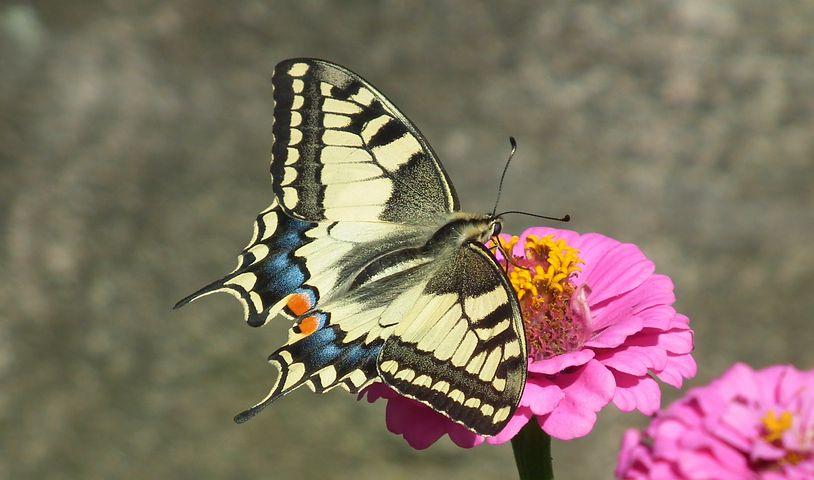 Cei mai frumosi fluturi din lume, in poze spectaculoase - Poza 5