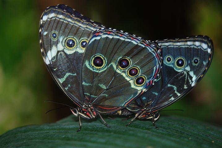Cei mai frumosi fluturi din lume, in poze spectaculoase - Poza 24