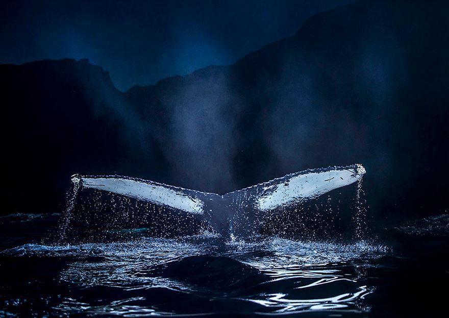 Balenele din Oceanul Inghetat, in poze superbe - Poza 10