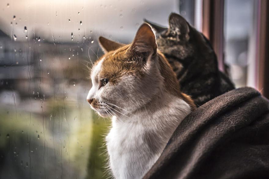 Pisicile care adora ploaia - Poza 4