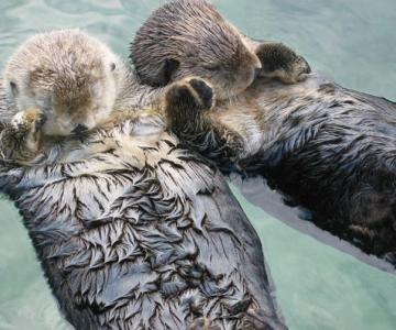 10 lucruri adorabile despre animale