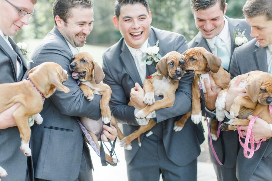 Cum arata imaginile de la nunta unui cuplu iubitor de animale? - Poza 4