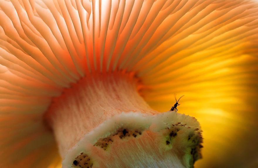 Concurs foto dedicat mediului: Splendoarea naturii, in poze uluitoare - Poza 10