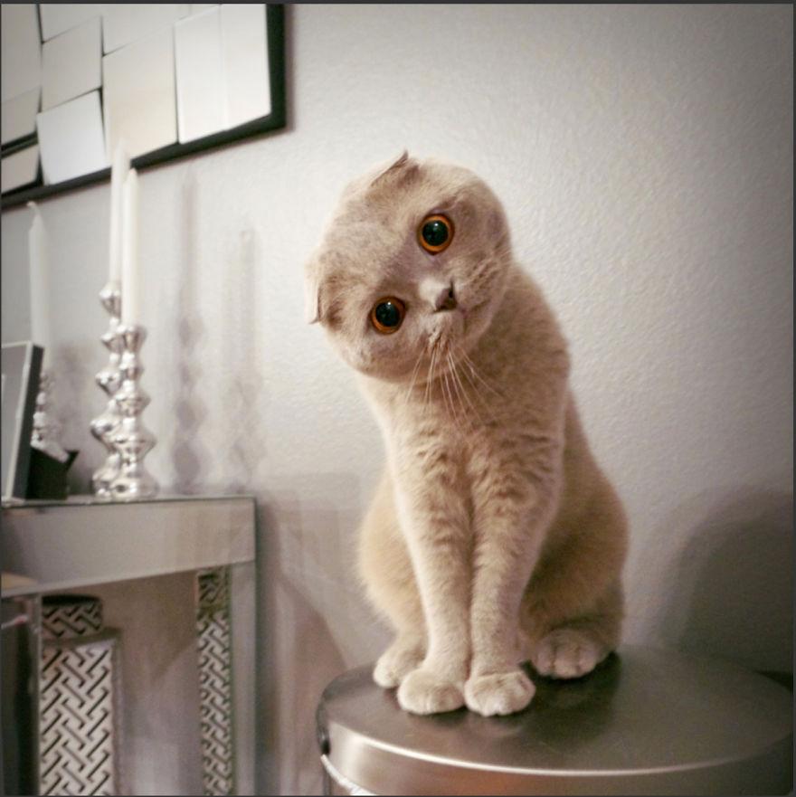 Cele mai frumoase poze cu pisici - Poza 3