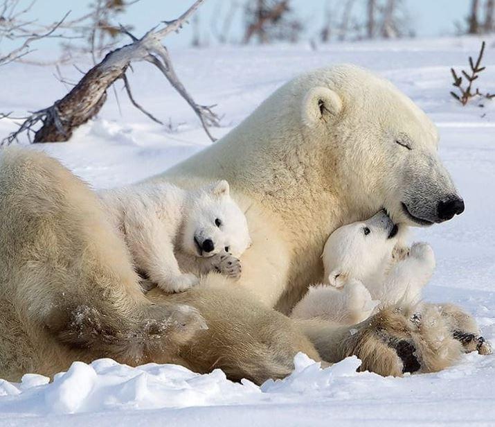 Cele mai simpatice animalute de la Polul Nord, in poze adorabile - Poza 15
