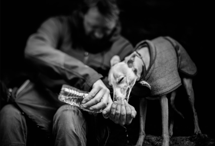 Cel mai bun prieten al omului, in poze superbe - Poza 13