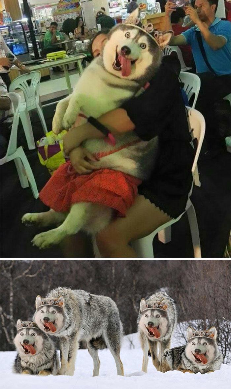 Uimitoare si hilare: Cele mai tari poze prelucrate in Photoshop - Poza 25