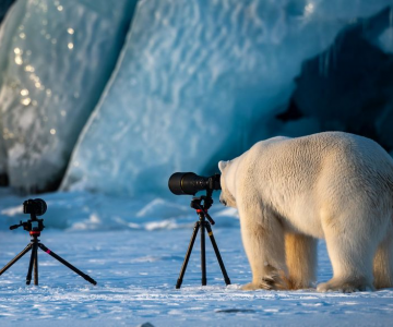 Comedy Wildlife Photography: Cele mai amuzante poze din salbaticie