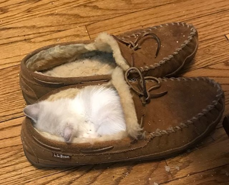 20+ Pisici adorabile si somnul lor nefiresc - Poza 14