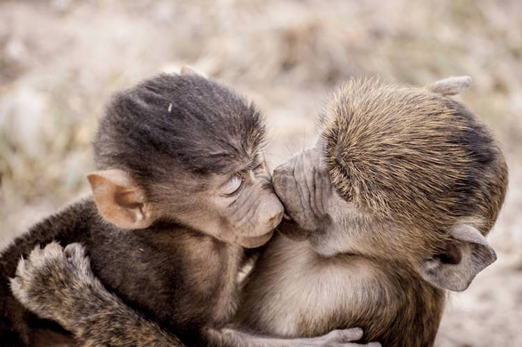 Premiile Comedy Wildlife: Poze amuzante cu animale salbatice - Poza 7