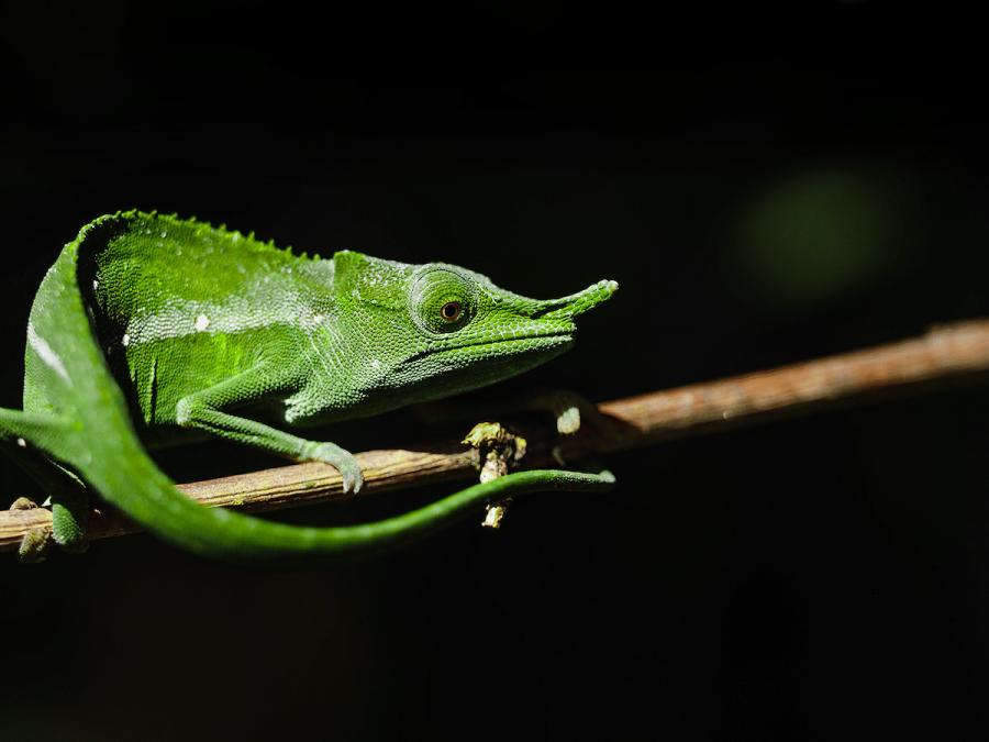Frumusetea salbaticiei din Madagascar, in poze uluitoare - Poza 6