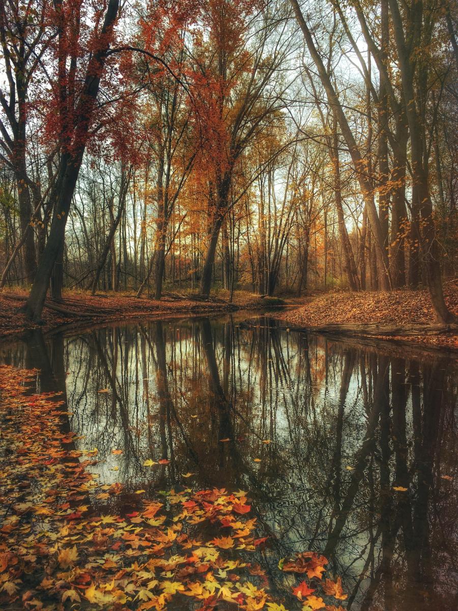 Cele mai frumoase peisaje de toamna, in imagini superbe - Poza 6
