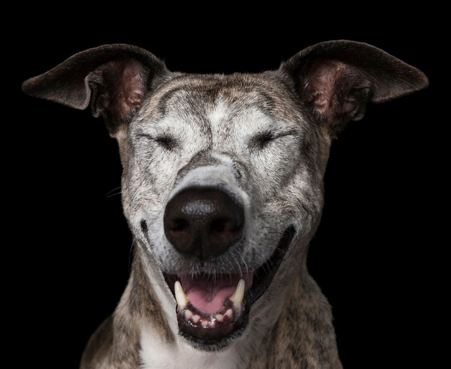 Cainii zen: Rasa canina, intre beatitudine si extaz - Poza 7