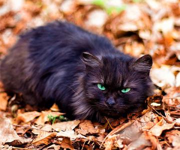 De vazut: 30 de poze cu pisicute