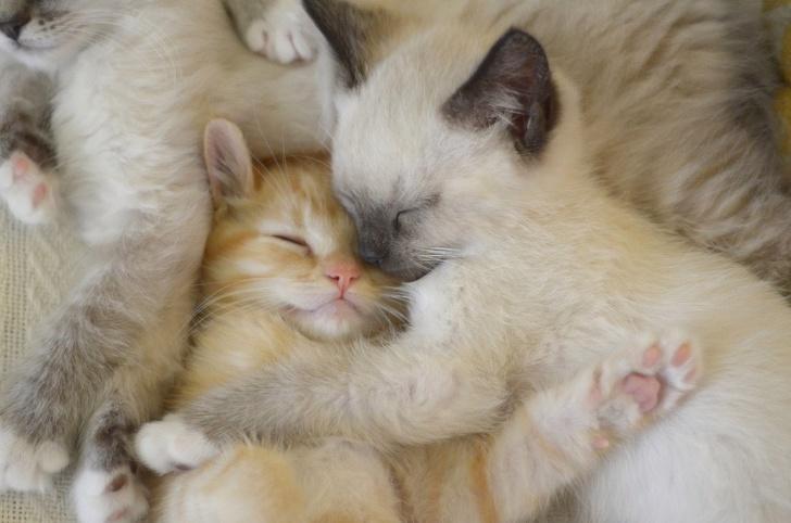 20+ Pisici adorabile si somnul lor nefiresc - Poza 15