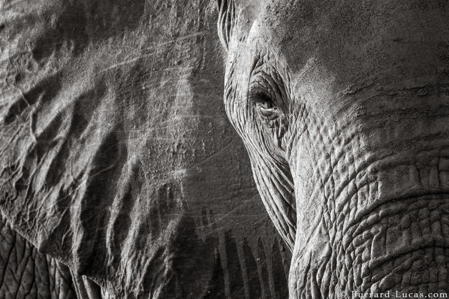 """Povestea ultimelor fotografii cu """"Regina elefantilor"""" - Poza 10"""