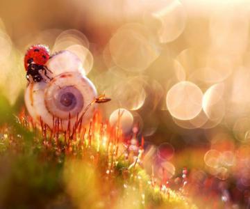 Lumea de basm a insectelor, in fotografii macro