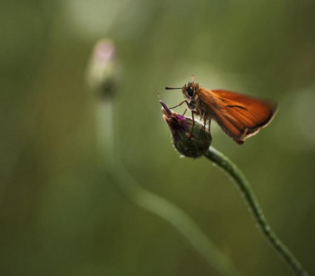 Natura la control, in 40 de poze - Poza 30