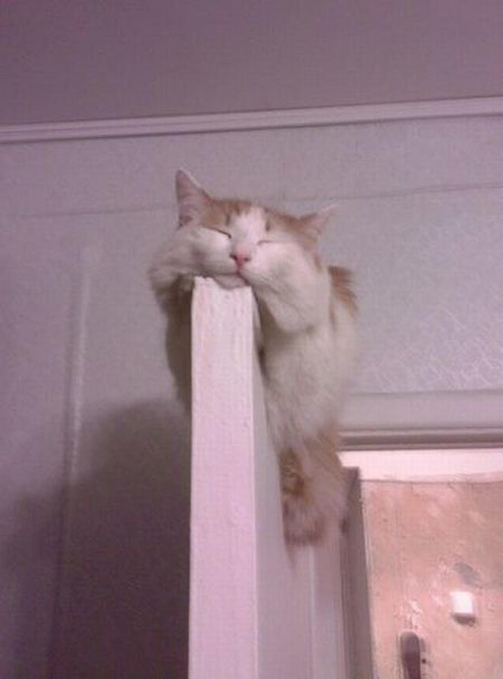 Pisicile chiar au simtul umorului. Avem dovada! - Poza 13