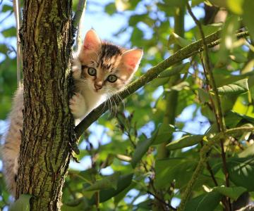 6 Semne clare ca pisica ta chiar te iubeste