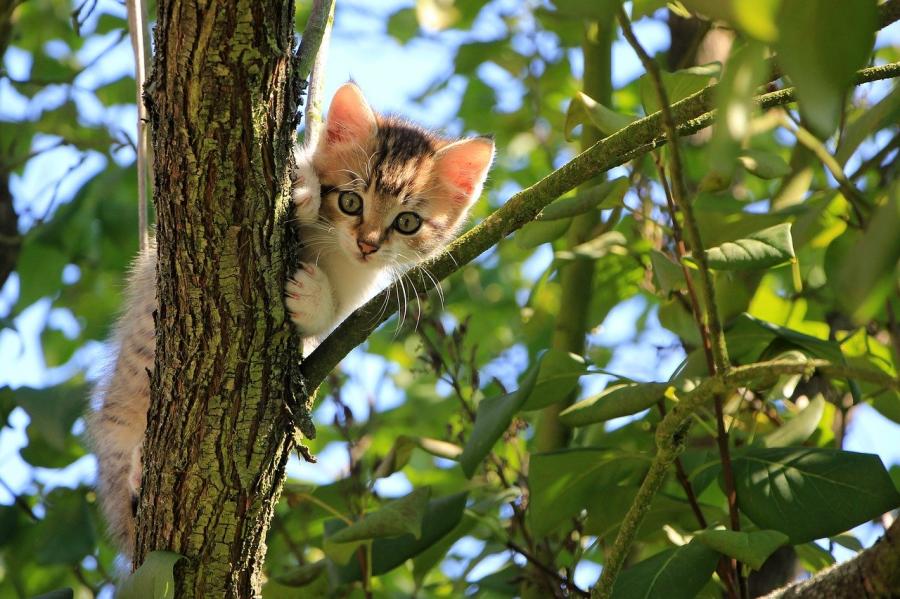 6 Semne clare ca pisica ta chiar te iubeste - Poza 1