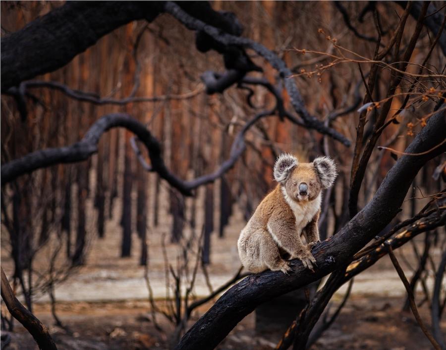 BigPicture Photo Contest: Fotografii spectaculoase din natura - Poza 5