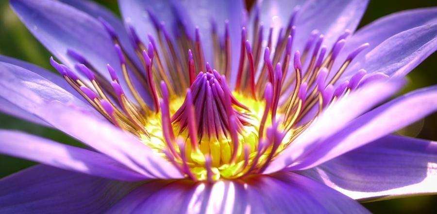 Cele mai frumoase flori din lume, intr-un pictorial de exceptie - Poza 6