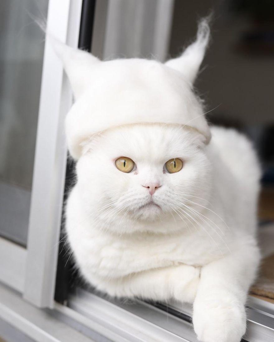 Cochete si haioase: Pisici cu palarii blanoase - Poza 3