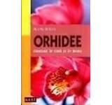 Orhidee crescute in casa si in birou