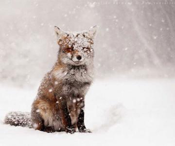 19 animale care se bucura de iarna!