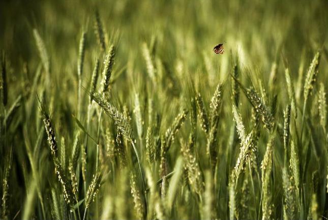 Natura la control, in 40 de poze - Poza 26