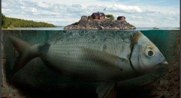Fishy Island by Erik Johansson