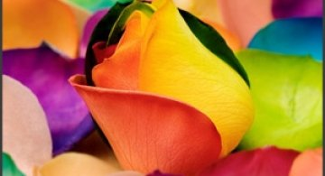 Super galerie: flori incredibile