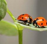 30 de poze cu... insecte!